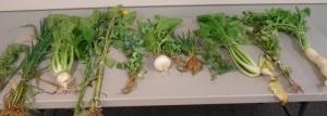 lush forage crops.500