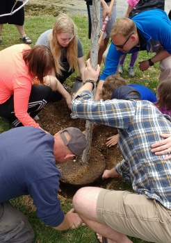 Many loving hands to support a new tree for the park.