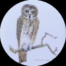 owlprintsnip